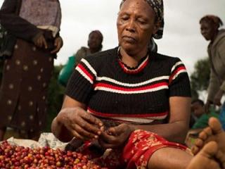 Nestle novartis wbcsd rural livelihoods case study